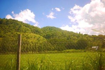 Mennonite-owned land