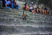 Coatis are so cute, Tikal