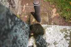 Hello little lizard - Copan ruins