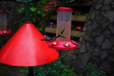 Hummingbird Garden, Monteverde, Costa Rica