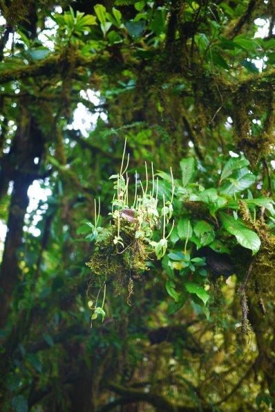 Cloud Forest, Monteverde, Costa Rica