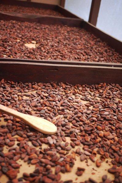 Sugarcane, Coffee, Chocolate Plantation, Monteverde, Costa Rica