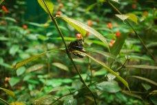 Eco Conservation Walk, La Fortuna, Costa Rica