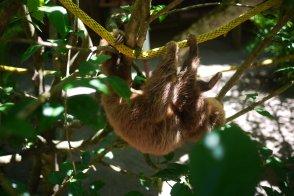 Jaguar Rescue Center, Puerto Viejo, Limon, Costa Rica