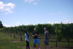 Red Hill Winery