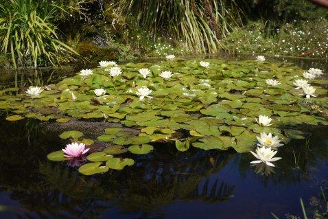 Ashcombe Maze and Lavender Gardens