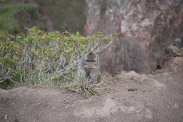 Monkey stop at Mt Batur